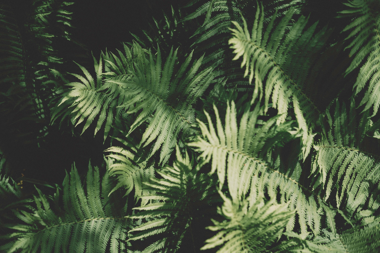 Schaduwplanten Voor Binnen Of Buiten Alles Wat Je Moet Weten