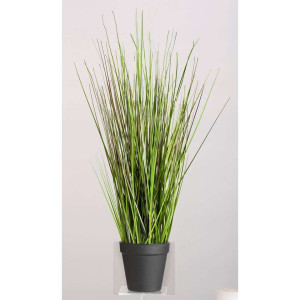 Grass Bush in pot - 35 cm - Leen Bakker