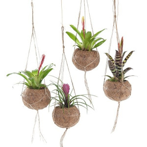 Green Lifestyle Store Kamerplant Kokodama Mix - Bromelia - Set van 4