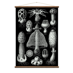 Wall Discovery - Diatoms Black Poster