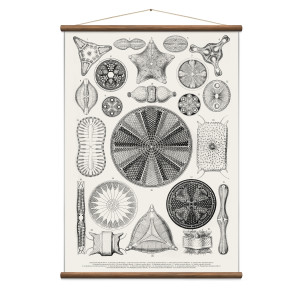 Wall Discovery - Diatoms White Poster