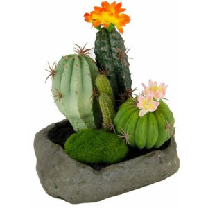 HOME AFFAIRE kunstplant Cactussen op steen