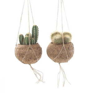 Green Lifestyle Store Kamerplant Kokodama Mix (Cactus) - Set van 2